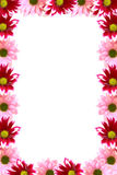 Flower backgorund. White background with flower frame Royalty Free Stock Photo