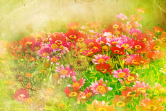 Flower backgrond , spring bloom Royalty Free Stock Images