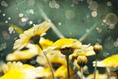 Flower backgrond , spring bloom Stock Image