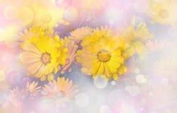 Flower backgrond , spring bloom Stock Images
