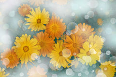 Flower backgrond , spring bloom Stock Photos