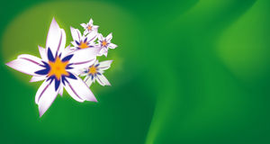 Flower background. Illustrated flowers with green background Royalty Free Stock Images
