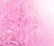 Flower background. Royalty Free Stock Image