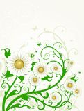 Flower background. Beautiful vector illustration, detailed drawing Royalty Free Stock Images