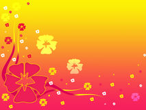 Flower background. Abstract orange and pink flower background Royalty Free Stock Photo