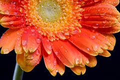 Flower on background. Spend in the water Stock Photos