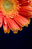 Flower on background. Spend in the water Royalty Free Stock Photos