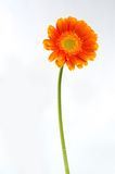 Flower on background. Spend in the water Stock Images