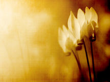 Flower background. Aged sepia canvas flower background Stock Photography