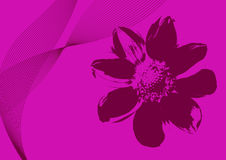 Flower Background. Illustration of fresh flower on pink background Royalty Free Stock Images
