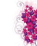 Flower background. Royalty Free Stock Image