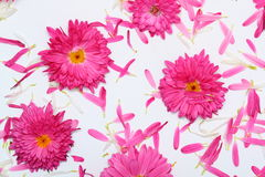 Flower background. This is simple flower background Royalty Free Stock Images