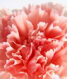 Flower_BACKGROUND Royalty Free Stock Images