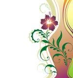 Flower background. Royalty Free Stock Photo