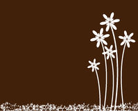 Flower background. Beautiful flower on brown background royalty free illustration