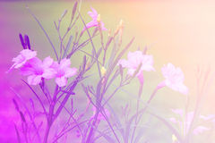 Flower background. beautiful flowers made with color filters Stock Image