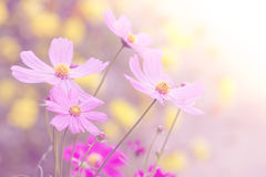 Flower background. Royalty Free Stock Photo