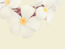 Flower background. Beautiful flowers made with color filters Stock Photos