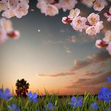 Flower background_40 Royalty Free Stock Photos
