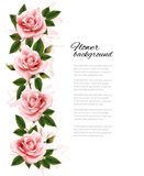 Flower background with beauty pink roses. Royalty Free Stock Images