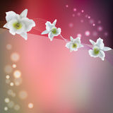 Flower background with blossom orchid Stock Image