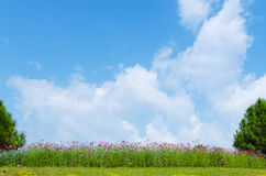 Flower on a background of the blue sky with tiny cloud Stock Image