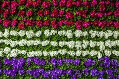 Flower background close-up photo.  Royalty Free Stock Photo