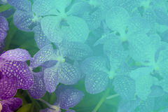 Flower background with color shading Royalty Free Stock Photo