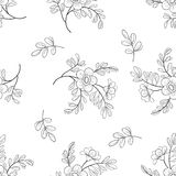 Flower background, contours Royalty Free Stock Photography