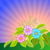 Flower background, cosmos. Flower  background, cosmos flowers and leaves and sun rays Royalty Free Stock Photo