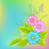 Flower background, cosmos. Flower  background, cosmos flowers on green and yellow Stock Images