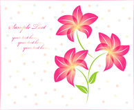 Flower background floral background isolated Stock Image