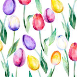 Flower background. Flower tulips over white. Floral spring Vector pattern. Tulips pattern Royalty Free Stock Photos
