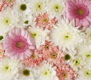 Flower background. Background of flowers in pink and white Stock Photos
