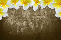 Flower background  frame/ border. Plumeria  flower  frame/ border wall Royalty Free Stock Photo