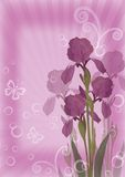 Flower background for greetings card Royalty Free Stock Photo