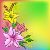Flower background, lily and mine Royalty Free Stock Photos