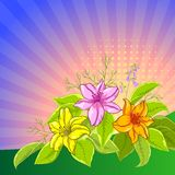 Flower background, lily and sun. Flower  background, lily flowers and leaves and sun rays Royalty Free Stock Photo