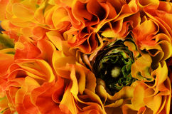 Flower background, macro of orange, yellow, green petals Royalty Free Stock Photo