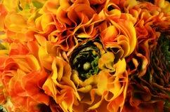 Flower background, macro of orange, yellow, green petals Royalty Free Stock Photography