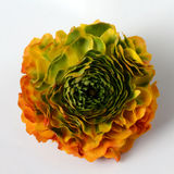 Flower background, macro of orange, yellow, green petals. Close up of bouquet Stock Images