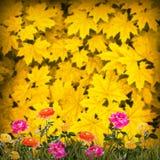 Flower background_99 Stock Photo