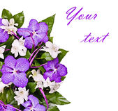 Flower background, orchids Stock Image