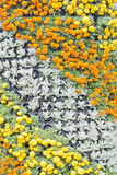 Flower background. Ornamental plants in the garden for background Royalty Free Stock Photos