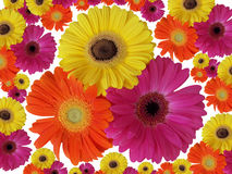 Flower background over white Royalty Free Stock Image