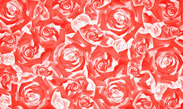Flower background pattern of beautiful red rose buds Stock Photo