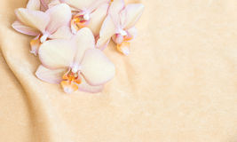 Flower background: peach orange orchid on the peach fabric Royalty Free Stock Photography