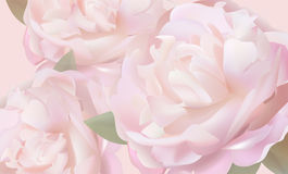 Flower background with peonies and petals. Flower soft background with peonies. Closeup of pink peony flowers, soft vector floral background, abstract editable royalty free illustration