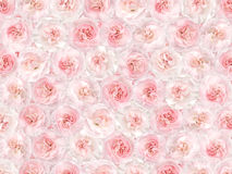 Flower background from a pink carnation Stock Images