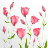 Flower  background. Pink eustoma Royalty Free Stock Photo